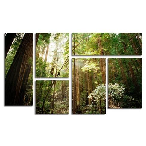 6pc Muir Woods by Ariane Moshayedi - Trademark Fine Art - image 1 of 4