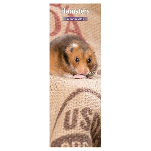 Hamster 2017 12 Month Slim Calendar - image 1 of 3