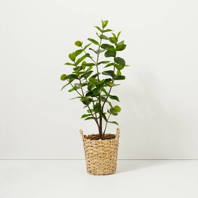 """40"""" Faux Autograph Tree in Planter - Hearth & Hand™ with Magnolia"""