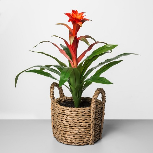 """25"""" x 12"""" Artificial Bromeliad Plant In Basket Red/Green - Opalhouse™ - image 1 of 1"""