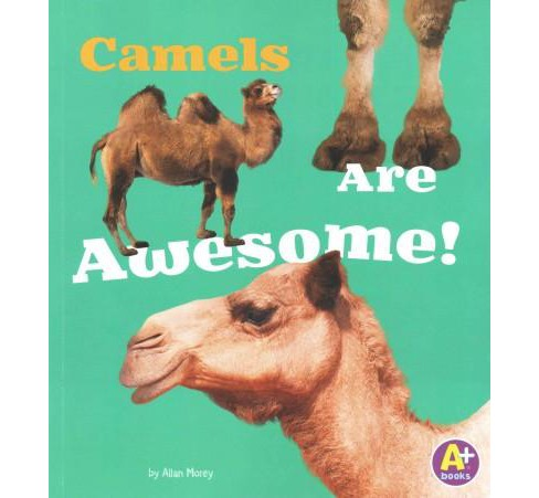 Camels Are Awesome! (Paperback) (Allan Morey) - image 1 of 1