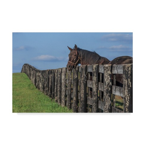 """Trademark Fine Art 47"""" X 30"""" Galloimages Online 'Hanging Out' Canvas Art - image 1 of 3"""