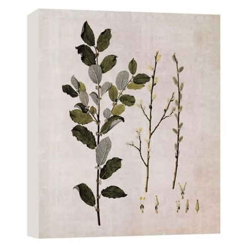 "Botany III Decorative Canvas Wall Art 11""x14"" - PTM Images - image 1 of 1"