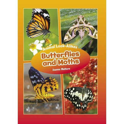 Butterflies and Moths - (Core Content Science -- Animal Look-Alikes) by  Joanne Mattern (Hardcover) - image 1 of 1