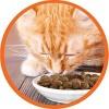 Iams Proactive Health with Salmon Adult Premium Dry Cat Food - image 4 of 4