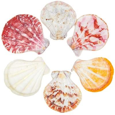 120 Packs Scallop Beach Seashells, Ocean Marine Natural Sea Shells for DIY Arts Crafts Crafting Wedding Baby and Bridal Shower Home Décor