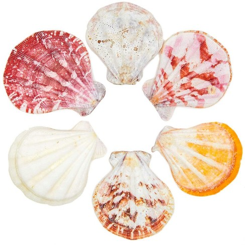 120 Packs Scallop Beach Seashells Ocean Marine Natural Sea Shells For Diy Arts Crafts Crafting Wedding Baby And Bridal Shower Home Decor Target