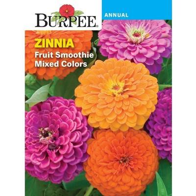 BURPEE Lavender English
