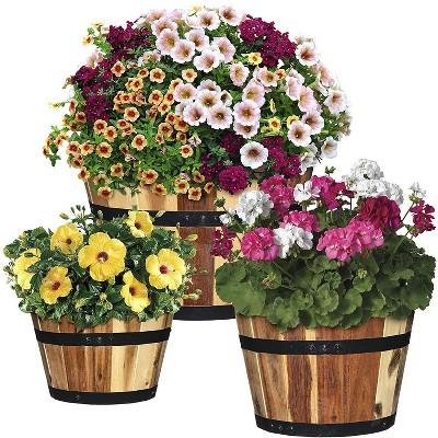 Set of 3 Acacia Wood Barrel Planters - Classic Home and Garden