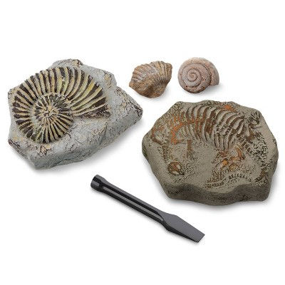 Discovery Kids Toy Excavation Science Kit Mini Fossil 2pc