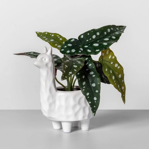 "10"" x 9"" Artificial Dotted Begonia in Llama Pot White/Green - Opalhouse™ - image 1 of 1"