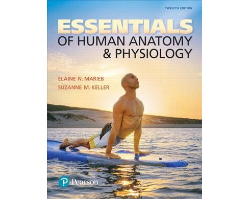 Essentials of Human Anatomy & Physiology (Paperback) (Elaine Nicpon Marieb & Ph.D. Suzanne M. Keller) - image 1 of 1