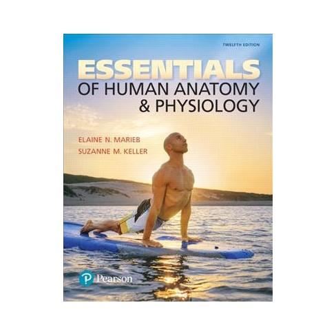 Essentials of Human Anatomy & Physiology (Paperback) (Elaine Nicpon ...