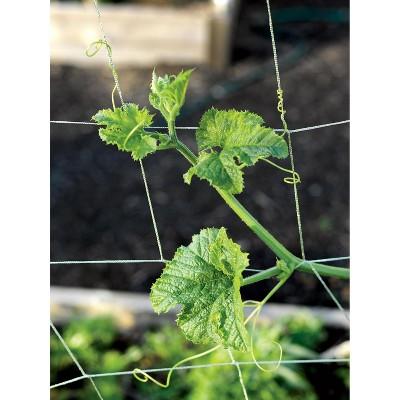 Vine and Veggie Trellis Netting, 5 x 30 - Gardener's Supply Company