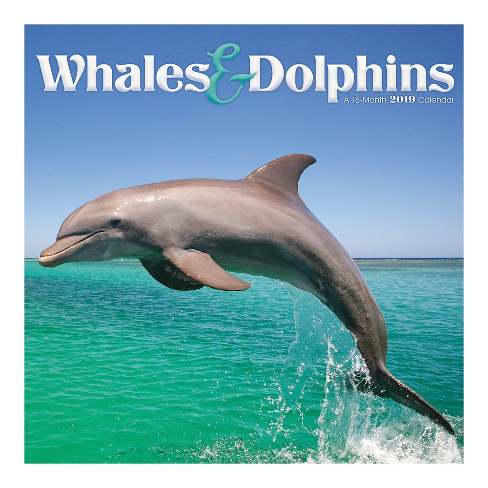 2019 Wall Calendar Whales & Dolphins - Trends International, Multi-Colored