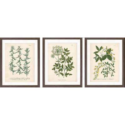 "(Set of 3)16"" x 20"" Wall Botanicals Green - Threshold™"