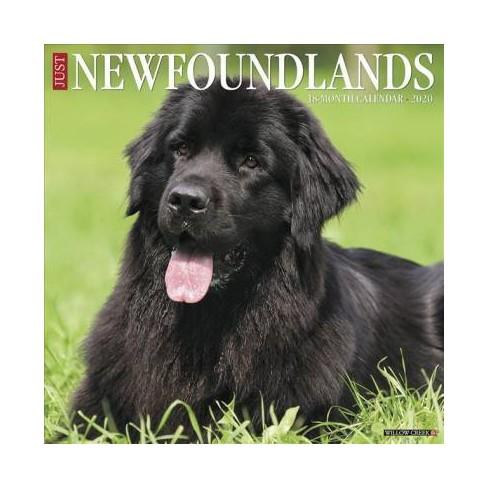 Fda Calendar 2020 Just Newfoundlands 2020 Calendar   (Paperback) : Target