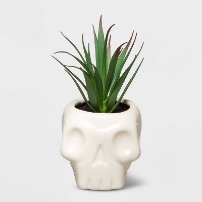 Halloween Skull with Succulent (Large)- Hyde & EEK! Boutique™