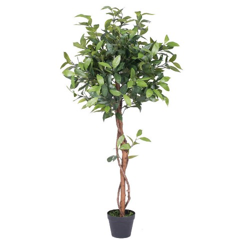Artificial Camellia Tree in Pot (50in) Green - Vickerman® - image 1 of 1