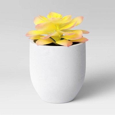 Small Succulent in Pot Yellow - Project 62™