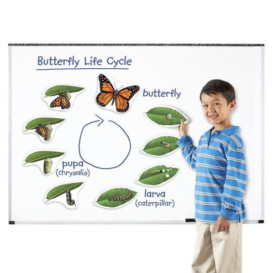 Learning Resources Giant Magnetic Butterfly Life Cycle image number null