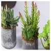 Artificial Succulent Set in Tin Vase Green - Vickerman - image 2 of 2