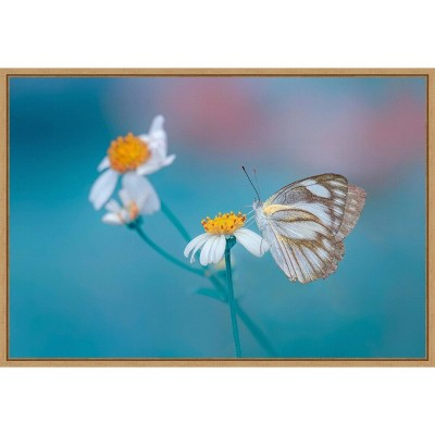 "23"" x 16"" Butterfly and Daisy Flowers by Adnan Hidayat P Framed Wall Canvas - Amanti Art"