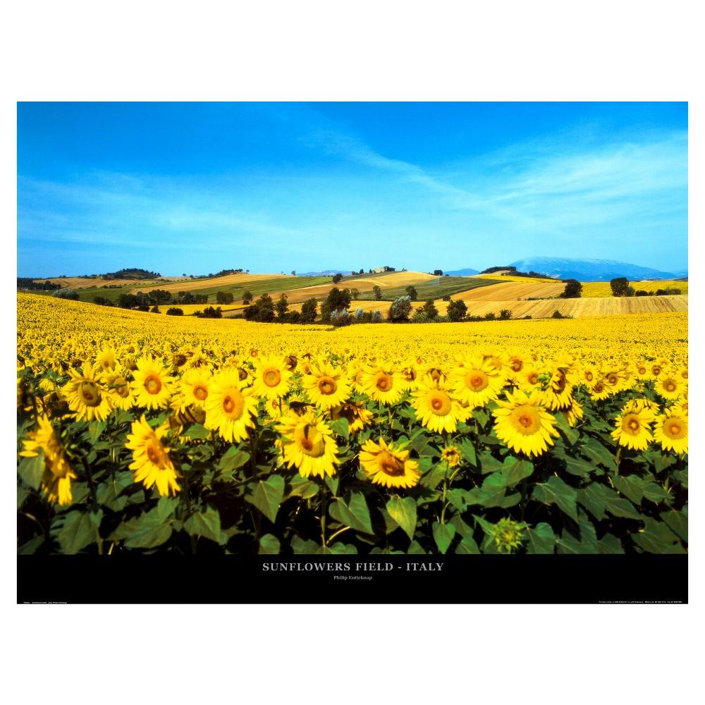Art.com Sunflowers Field, Umbria by Philip Enticknap - Art Print, Sun Yellow