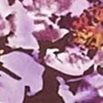 Burgundy Mist Floral