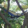 Vivere Double Parachute Hammock - image 4 of 4
