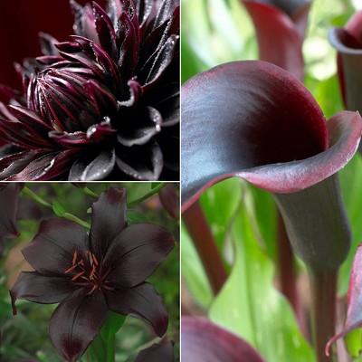 Van Zyverden Set of 19 Color Your Garden Collection Bulbs Black