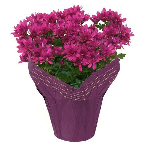 """6"""" Lavender Mum - image 1 of 1"""