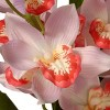 "28"" Light Pink Orchid Flowers - National Tree Company - image 3 of 4"
