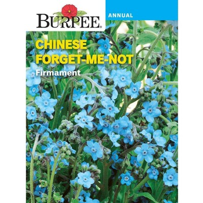 Burpee Chinese Forget-Me-Not Firmament