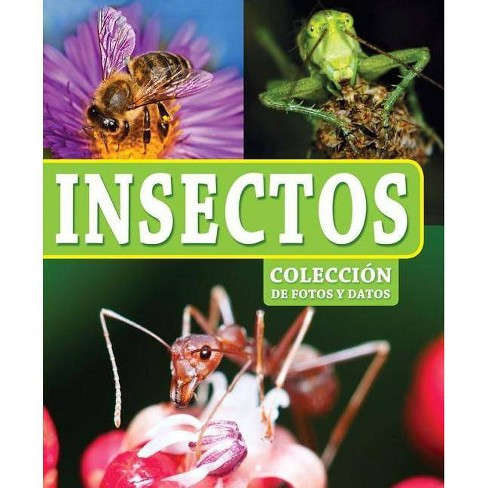 Insectos - (Coleccion de Fotos y Datos) by  Kidsbooks (Hardcover) - image 1 of 1