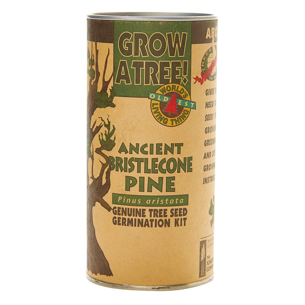 Image of Ancient Bristlecone Pine Seed Grow Kit - The Jonsteen Company