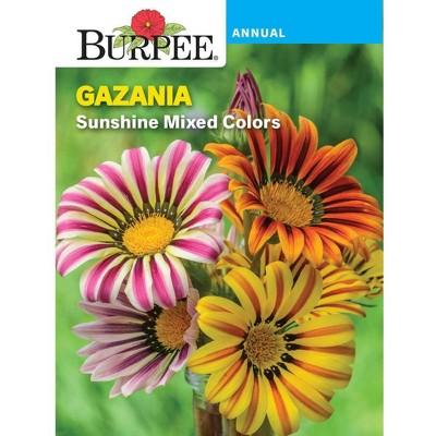 Burpee Gazania Sunshine Mixed Colors