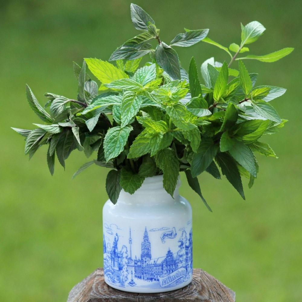 Burpee 6pc Mint Garden - Cottage Hill