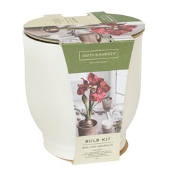 Red Amaryllis Grow Kit - Cream - Smith & Hawken™