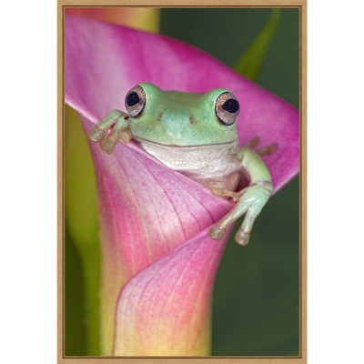"""16"""" x 23"""" Australian Tree Frog in Flower by Adam Jones Danita Delimont Framed Canvas Wall Art - Amanti Art"""