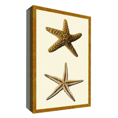 """Starfish Collection II Decorative Canvas Wall Art 11""""x14"""" - PTM Images - image 1 of 1"""