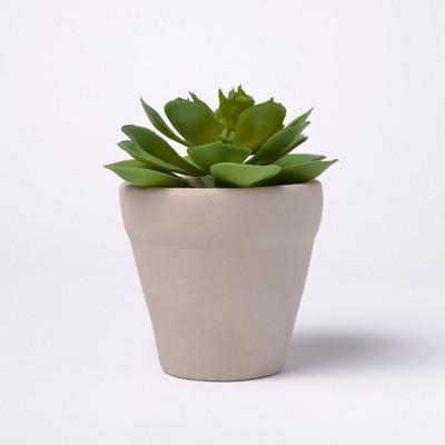 6  Potted Succulent - Lloyd & Hannah