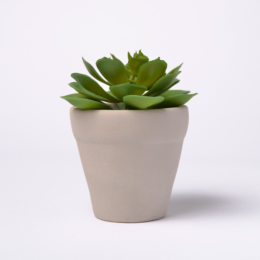 Image of 6 Potted Succulent - Lloyd & Hannah, Green