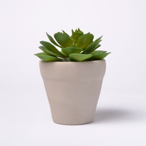 "6"" Potted Succulent - Lloyd & Hannah - image 1 of 1"