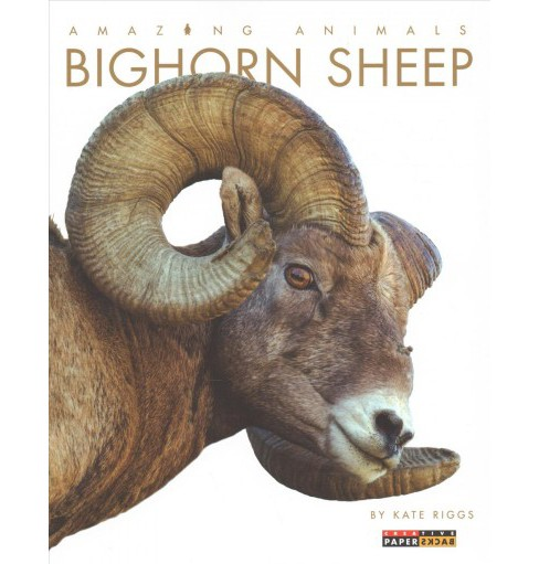 Bighorn Sheep -  Reprint (Amazing Animals) by Kate Riggs (Paperback) - image 1 of 1