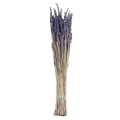 "Vickerman 12-18"" Lavender Lavender, preserved - image 1 of 4"