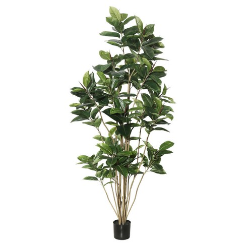 Artificial Potted Rubber Tree (7ft) Green - Vickerman® - image 1 of 1