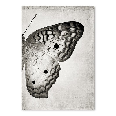 Americanflat Gray Butterfly Ii by Chaos & Wonder Design Poster