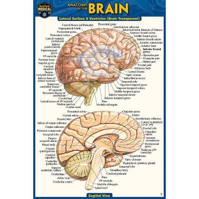 Anatomy of the Brain (Pocket-Sized Edition - 4x6 Inches) - 2nd Edition by  Vincent Perez (Poster)