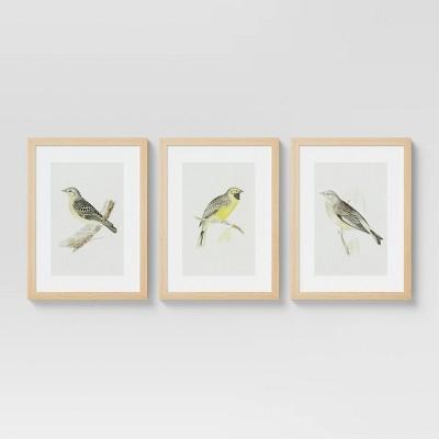 "(Set of 3) 12"" x 16"" Birds Framed Under Glass - Threshold™"